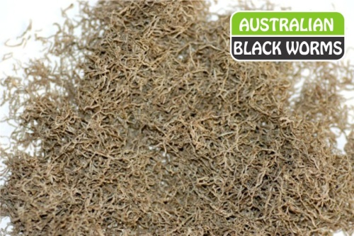 Australian Freeze-dried Black Worms - 50 grams (loose)
